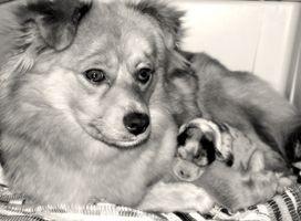 ¿Cuánto tiempo cachorros recién nacido enfermera?