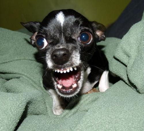 ¿Por qué los perros perder sus dientes?