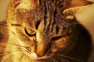 Como perros y problemas de tiroides