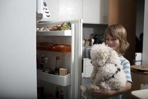 Cómo enseñar a mi perro a buscar Me a Soda