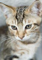 Cuáles son las causas de un gato no comer y los vómitos?