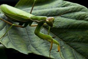 Las especies de insectos en la selva tropical
