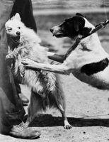 Cómo cuidar a un perro mordido por otro perro