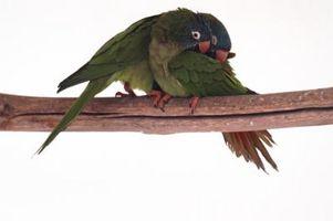 Cómo hacer que la jaula de un pájaro del amor de la madera