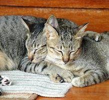 La curación de la arcilla a base de hierbas para gatos