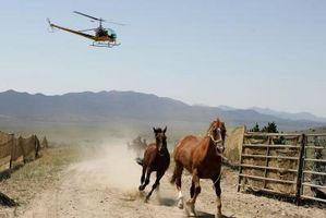 Datos sobre el caballo Masacre en los Estados Unidos