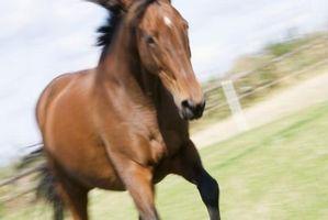 Cómo domar un caballo