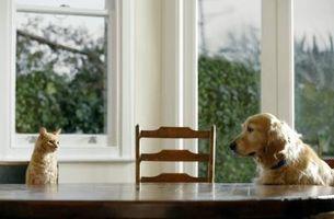 Cómo hacer que el gato hecha en casa como la más barata y golosinas para perros