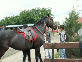 Cómo: El aprender sobre los caballos para los niños
