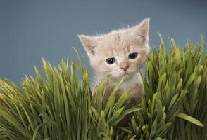 ¿Cómo deshacerse de las pulgas en la gente y de los gatitos