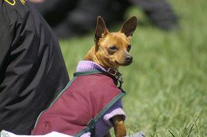 Cómo hacer ropa para perros Chihuahua en el Hogar