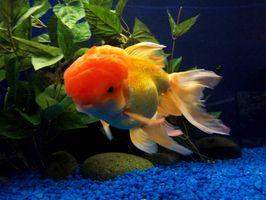 Cómo agregar sal al Goldfish Aquarium