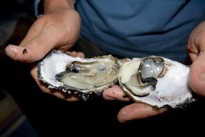Cómo poner las ostras en una Shell para comer