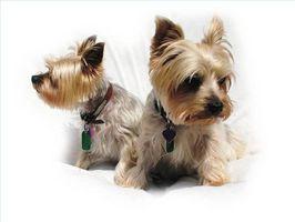 Las causas de la pancreatitis en los perros