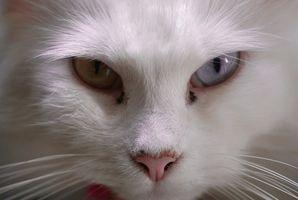 Medicación la agresión de los gatos