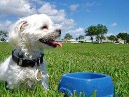 Cómo hacer casera alimentos para perros que es bueno para el hígado