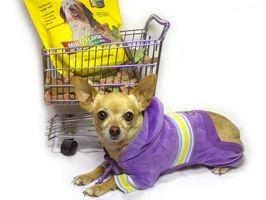 Antecedentes de los alimentadores automáticos para perros y dispensadores de agua