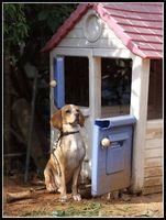 Entrenamiento de seguridad para perros