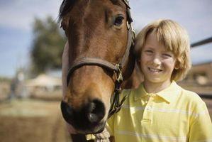 Signos y síntomas de enfermedades del corazón en los caballos más viejos