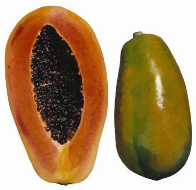 Cómo Disolver el escudo de semillas de papaya exterior