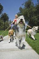 Cuál es la diferencia entre la media y los perros de raza grande?