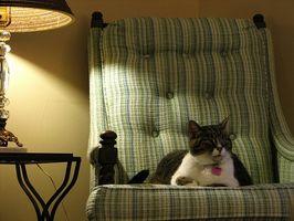 ¿Por qué los gatos se sientan bajo Sillas de oscilación?