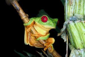 ¿Cuál es la cobertura exterior de una rana?
