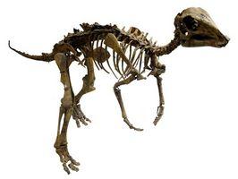 Museos de dinosaurios en Florida