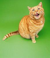 ¿Qué tan rápido puede correr un Gato doméstico?