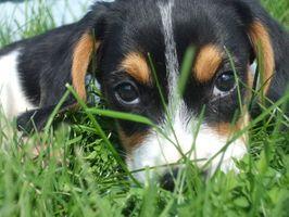La depresión en los cachorros