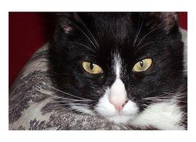 Tratamiento de la diarrea del gato