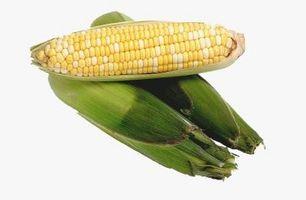 Tipos de harina de semilla de maíz dentado