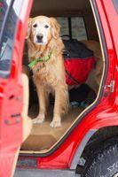 Lista de embalaje para viajar con un perro