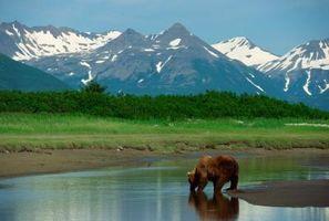 Vacaciones de vida silvestre en Alaska