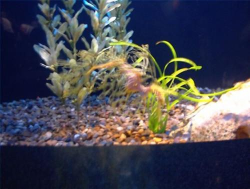 Cómo hacer decoraciones de seguro para mis Fish Tank