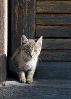 Vallas al aire libre para los gatos
