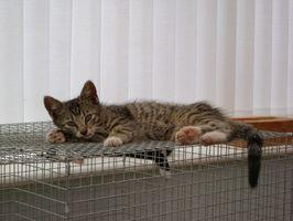Cómo construir una jaula para mascotas