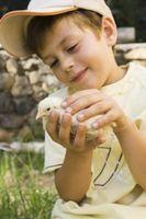 Lista de verificación de las necesidades de un pollo del bebé