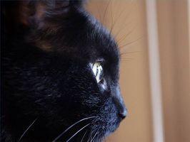 Cómo convertirse en un experto en comportamiento del gato