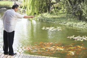 La mejor manera de limpiar verde del estanque de peces de agua