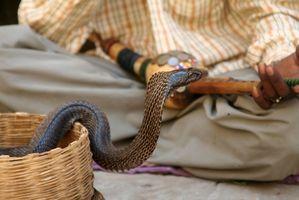 Cuáles son los tratamientos para el escupir veneno de la cobra?