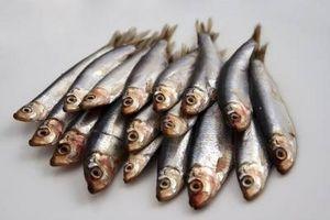 ¿De dónde viene el aceite de pescado viene?
