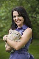Cómo alimentar a los conejos asados Soja