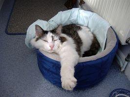 El pronóstico para la demencia felina