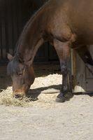 ¿Cuáles son las causas de la diarrea en los caballos?