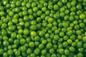 Cómo asar y sal verde Guisantes