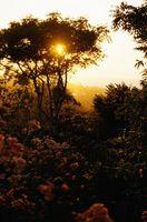 Senderismo por la selva tropical