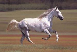 Cómo hacer que los caballos de ganancia de peso rápidamente