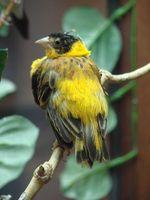 Cómo construir una jaula de pájaro de encargo