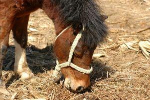 Cómo hacer un alimentador de Heno del caballo